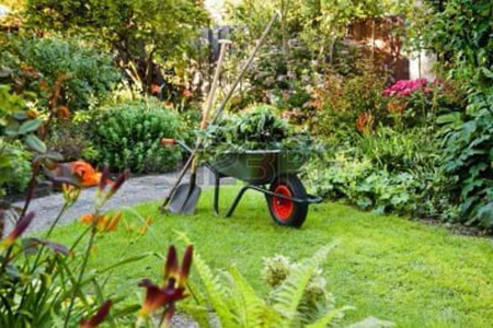 Selecting the right Plants for your Garden